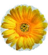 """17"""" Yellow Gerbera Flower Foil Balloon"""