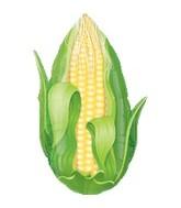 """18"""" Super Shape Corn Mylar Balloon"""